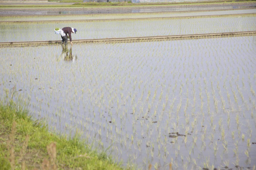 耕作放棄地の定義と現状