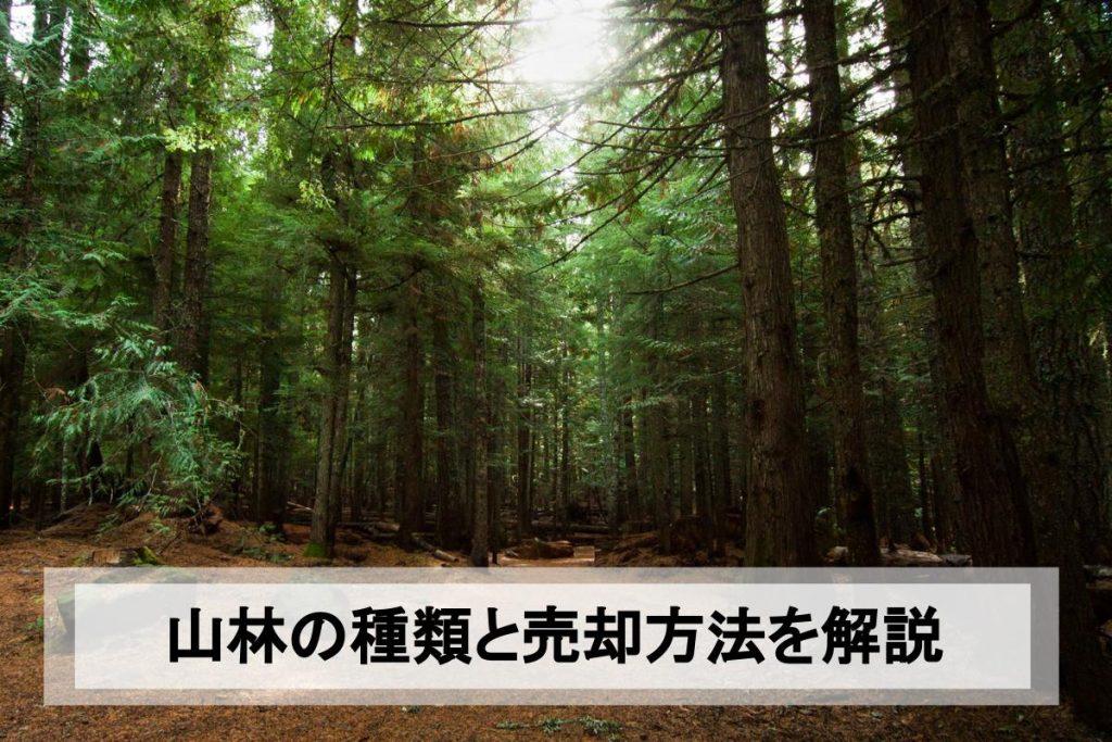 山林売却のために知っておきたいこと|山林の種類と売却の流れ